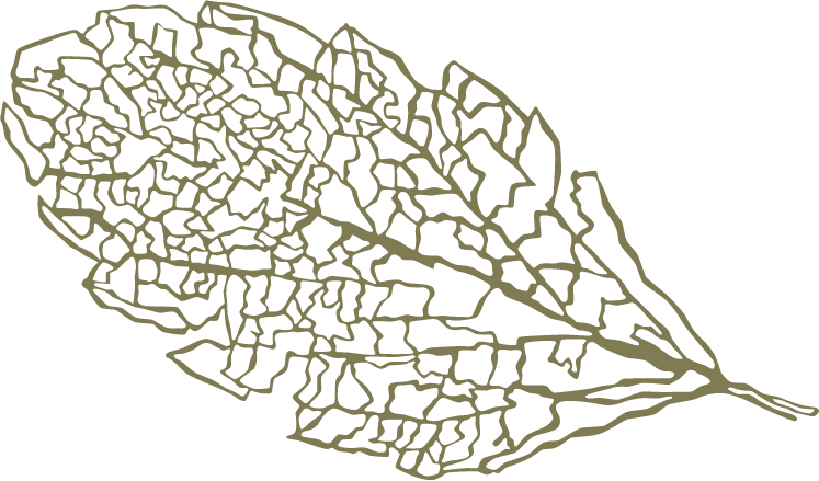 leaf_orig